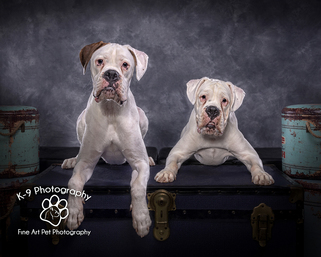 Award winning pet Photography by Adrian Bullers