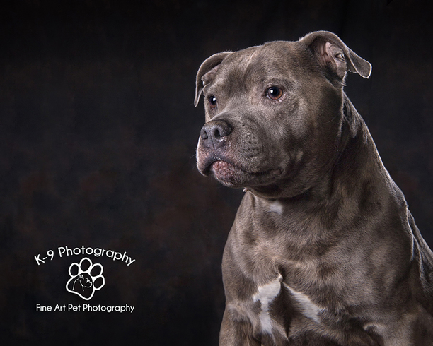 Pet Photography - Pet Photographer - Dog photography by Adrian Bullers