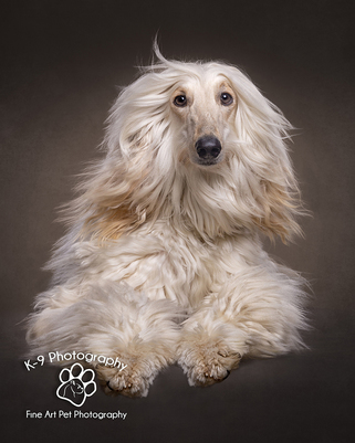 Adrian Bullers  for Award winning pet Photography in England