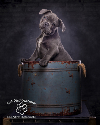 Dog Cat and pet Photography by Adrian Bullers Bedford U.K.