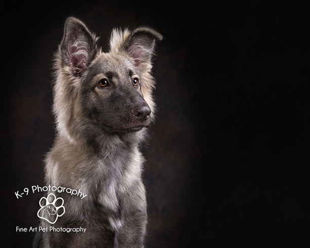 Pet photography by Adrian Bullers. Just £65 for a session.