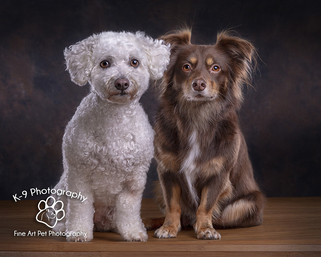 Dog Cat and Pet Photography in Bedford | Photographed in the studio by professional Award winning Bedfordshire Pet photographer Adrian Bullers