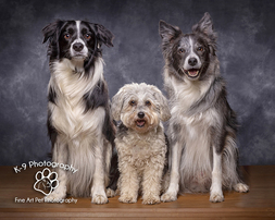 Dog Cat and Pet Photography in Bedfordshire | Photographed in the studio by professional Award winning Bedford Pet photographer Adrian Bullers