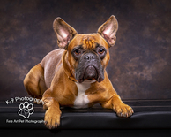 Dog photography in Bedford and Bedfordshire