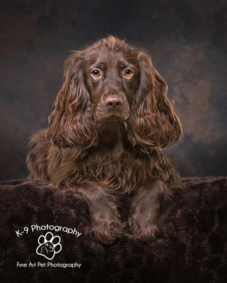 Award winning Dog Photography from professional Bedford Pet photographer Adrian Bullers