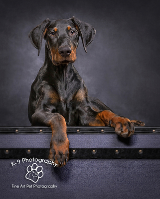 Dog and Pet Photography specialist in Bedford, Bedfordshire |photographed in the studio by award winning Dog and Pet photographer Adrian Bullers
