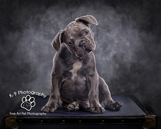 Award winning Dog Photography from Bedford Pet photographer Adrian Bullers