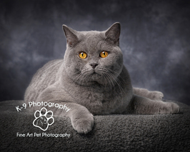 Cat photographer in Bedford and Bedfordshire