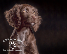 dog & pet photography in Bedford Bedfordshire