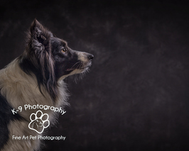 Dog Photographer Bedford | Dog Photography Bedfordshire | Award winning Adrian Bullers pet photographer