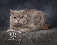 Cat photography in Bedford and Bedfordshire
