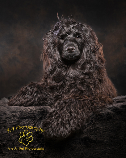 London Pet Photographer, Pet Photography