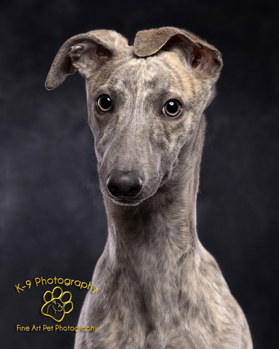k-9photography.com By Adrian Bullers - dog photographer London