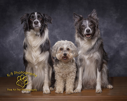 Fine-art Pet Photographer London, Watford, Aylesbury and St Albans