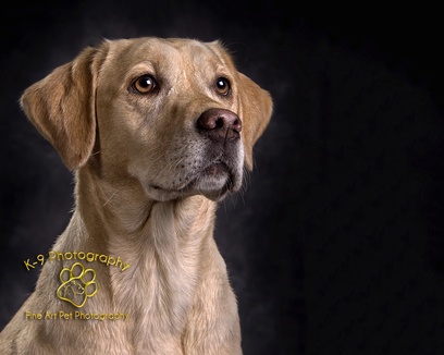 The London Dog Photographer - Adrian Bullers AMPA