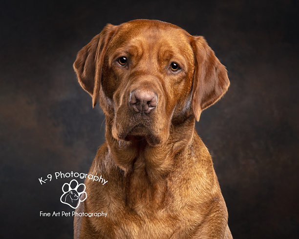 Pet Photographer - Pet Photography - Dog photography by Adrian Bullers