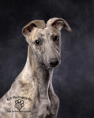 Award winning Dog Photography from professional Bedfordshire Pet photographer Adrian Bullers