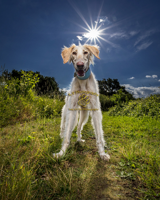 Outdoors Award winning Dog Photography from Bedfordshire Pet photographer Adrian Bullers