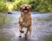 Dog Photography London | Dog Photographer London