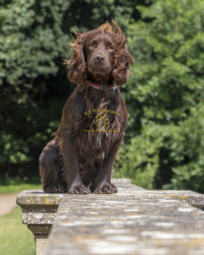 The London Dog Photographer for fabulous location photographs of your dog - Adrian Bullers AMPA