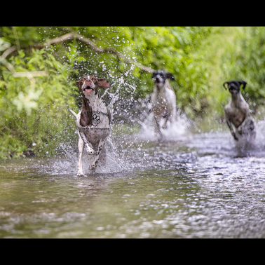 Home | Dog Photographer Bedfordshire and the UK