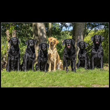 Dog Photographer Bedfordshire and the UK