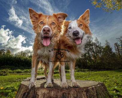 London Pet Photographer for outdoor sessions
