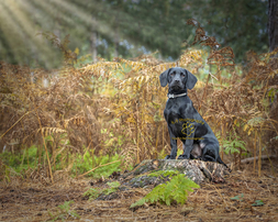 Beautiful location pet photography by Adrian Bullers an Award winning Pet photographer in the UK