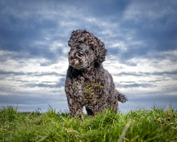 Award winning location Dog Photography from professional Bedford Pet photographer Adrian Bullers