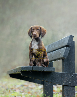 Adrian Bullers  for Award winning outdoor pet Photography in England