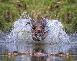 Award winning location Dog Photography from professional Bedfordshire Pet photographer Adrian Bullers