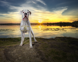 Dog Photography from professional Bedfordshire Pet photographer Adrian Bullers
