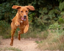 Location Pet photography by Adrian Bullers aa Award winning UK Pet photographer