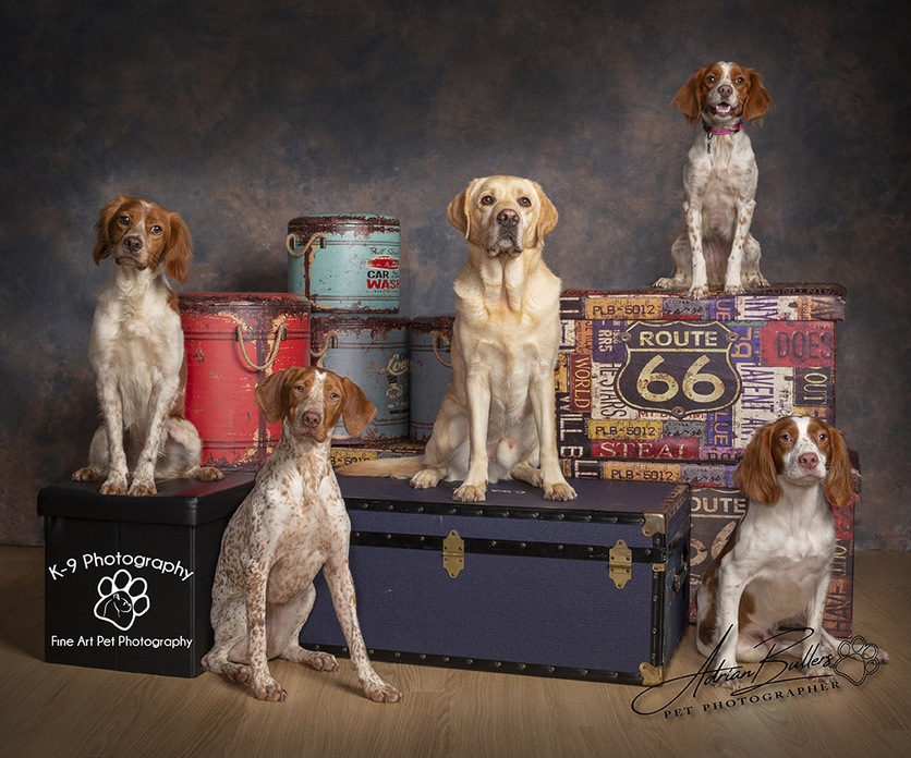 Dog and Pet Photography specialist in Bedford, Bedfordshire | Five dogs captured in the studio by award winning Dog and Pet photographer Adrian Bullers