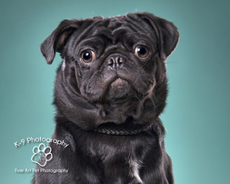 Amazing pet photography | pet photography by k-9 photography