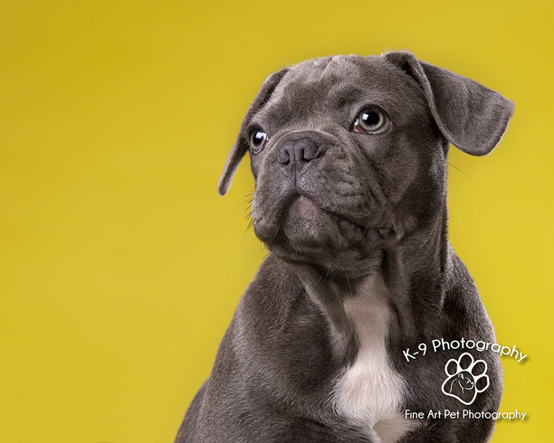 Pet Photography Northamptonshire - K-9 Photography